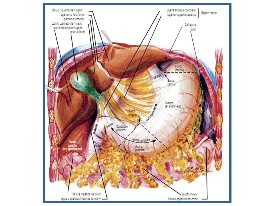 Moderno Agujeros Anatomía Y Fisiología Componente - Imágenes de ...