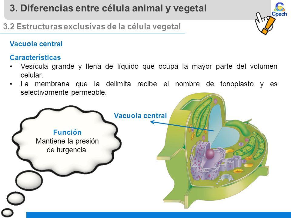 Pptces003cb31 A16v1 Clase Células Eucariontes Células