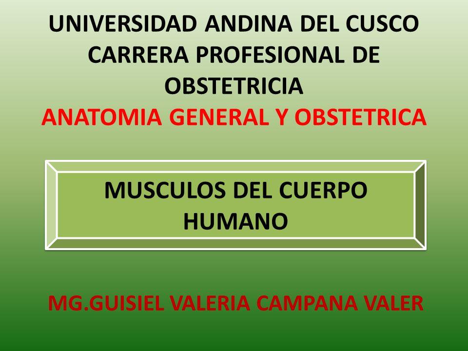 UNIVERSIDAD ANDINA DEL CUSCO CARRERA PROFESIONAL DE OBSTETRICIA ...