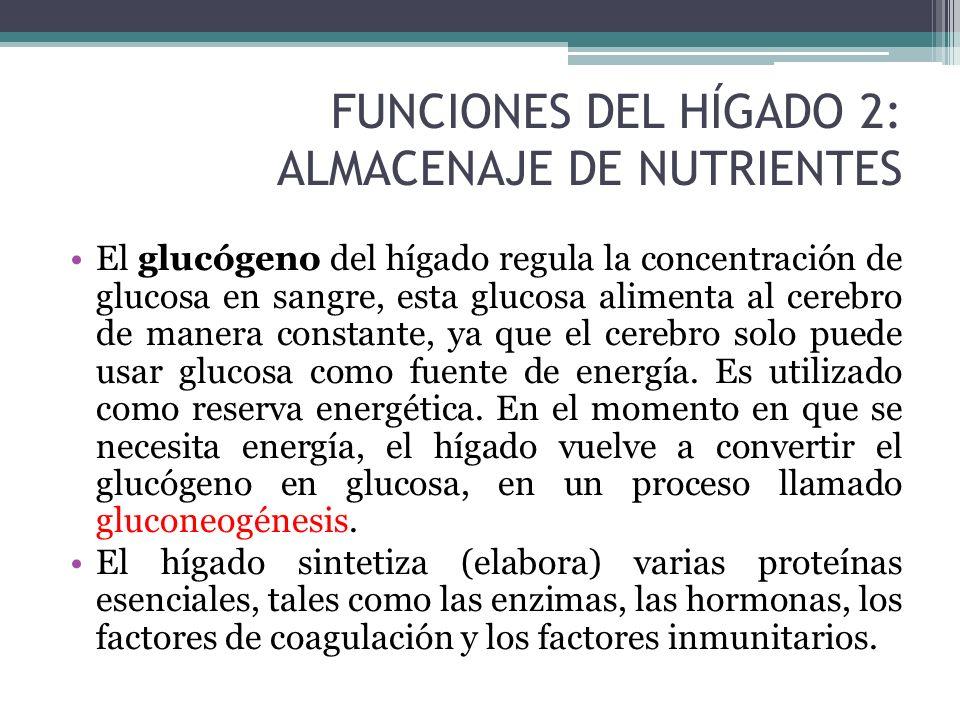 glucosa se almacena en el higado
