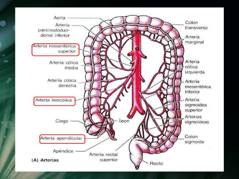 Anatomía de estomago e intestinos - ppt video online descargar