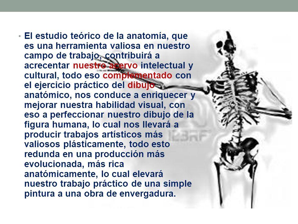 OSTEOLOGÍA: EXTREMIDADES SUPERIORES E INFERIORES DEL CUERPO HUMANO ...