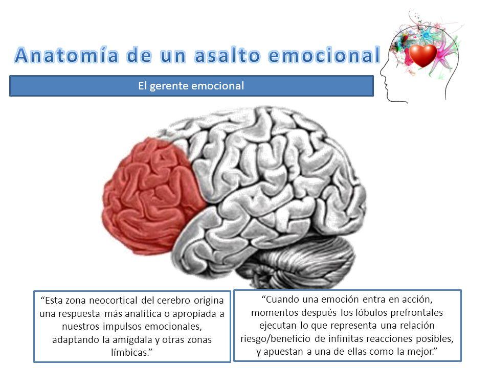 Famoso Serpiente De La Anatomía Del Cerebro Friso - Anatomía de Las ...