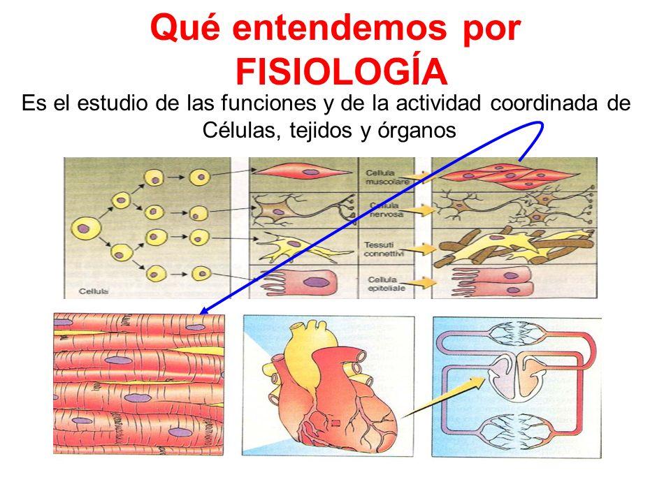 FISIOLOGÍA DE LA MEMBRANA PLASMÁTICA 1.- Estructura y composición de ...