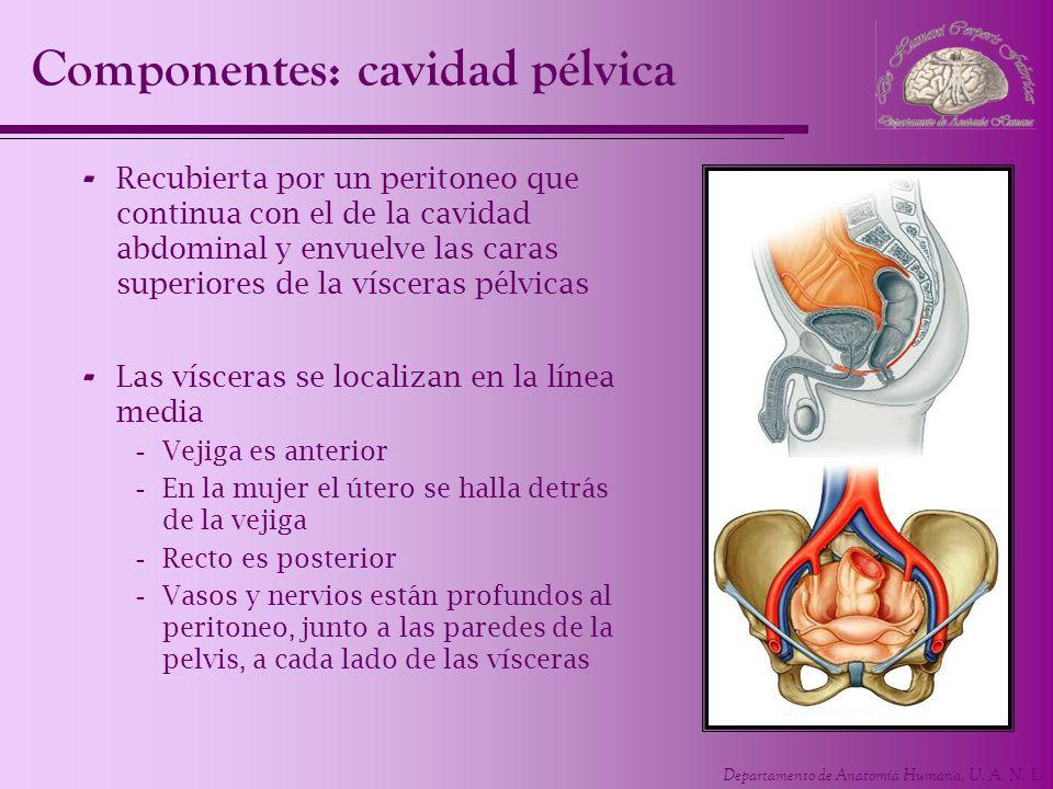 UNIDAD 5 Pelvis y Perineo. Departamento de Anatomía Humana ...