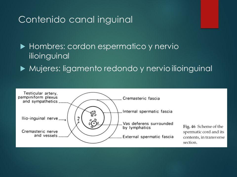 CONCEPTO DE HERNIA Protrusión de cualquier estructura anatómica por ...