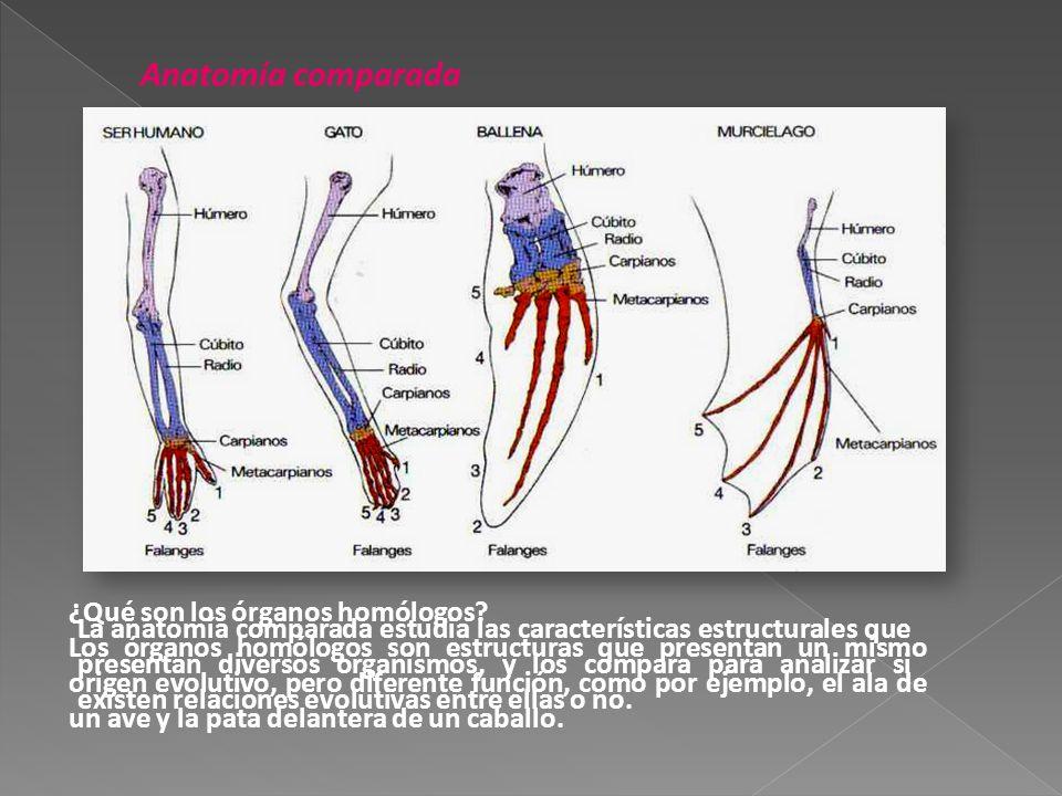 Teorías evolutivas Teoría de Lamarck Los seres vivos sufren ...