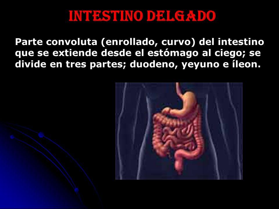 CURSO DE QUIROMASAJE PATOLOGÍAS EN QUIROMASAJE. Patología abdominal ...