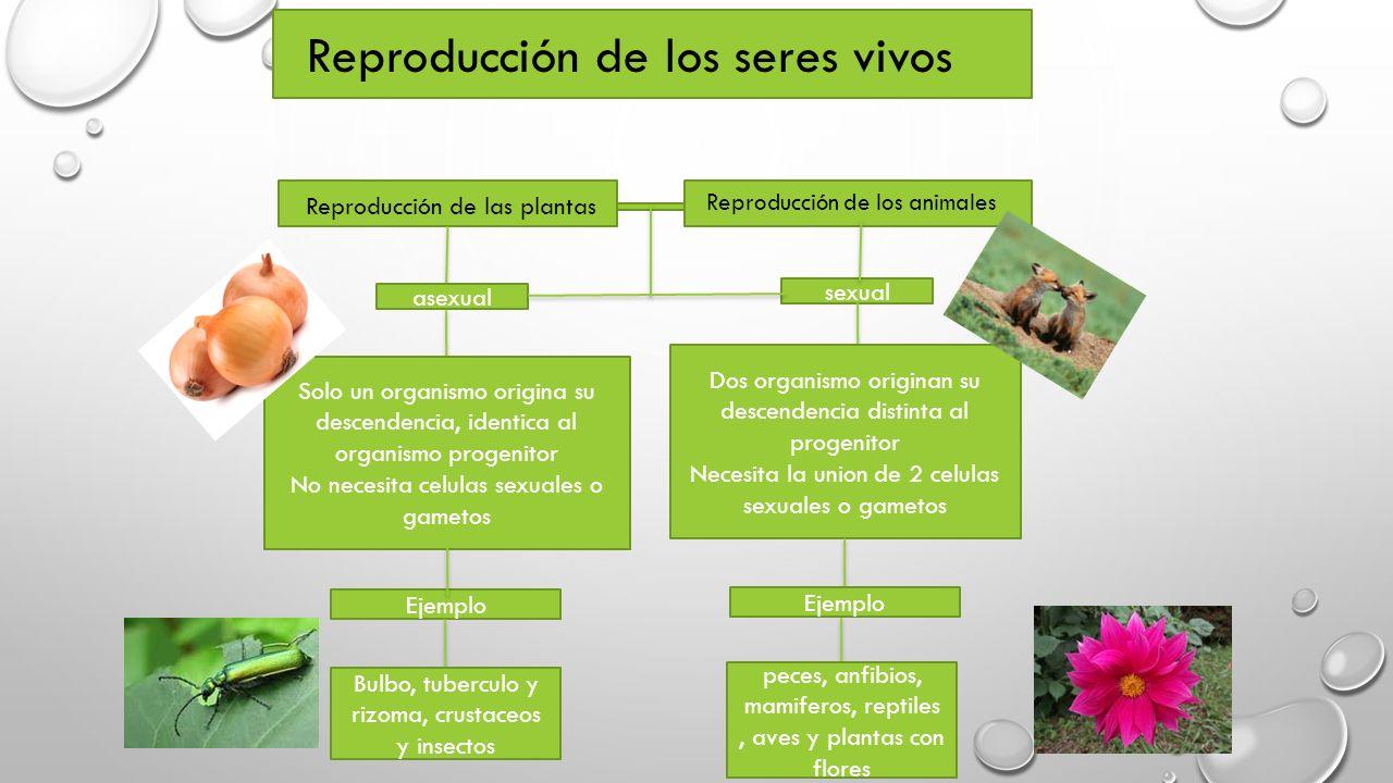Mamiferos con reproduccion asexual de las plantas
