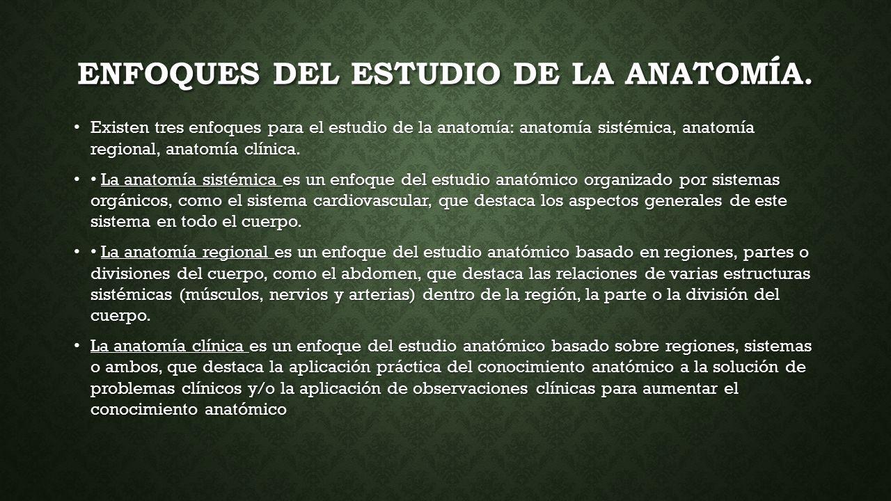 CONCEPTOS DE ANATOMÍA, FISIOLOGÍA E HIGIENE INDIVIDUAL CONCEPTOS DE ...