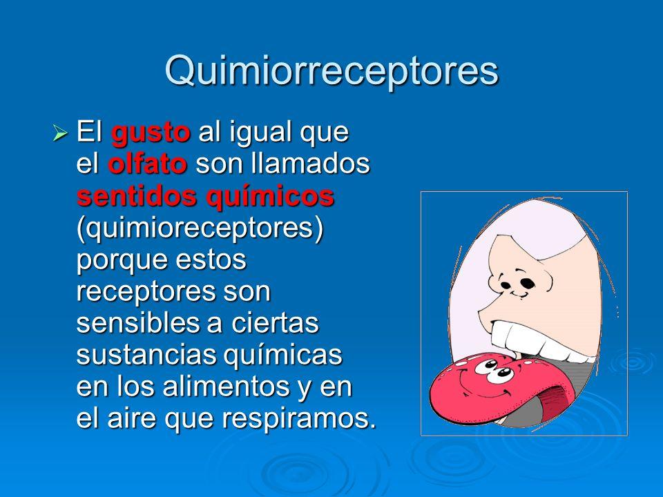 Quimiorreceptores y Mecanorreceptores Objetivos  Discutir el ...
