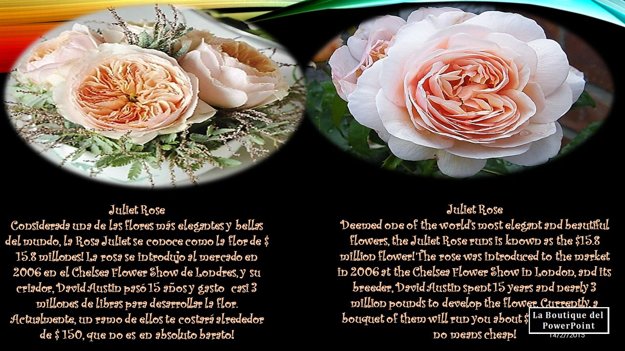 10 Flores Más Caras Del Mundo Tan Cara Puede Ser Una Flor Bueno