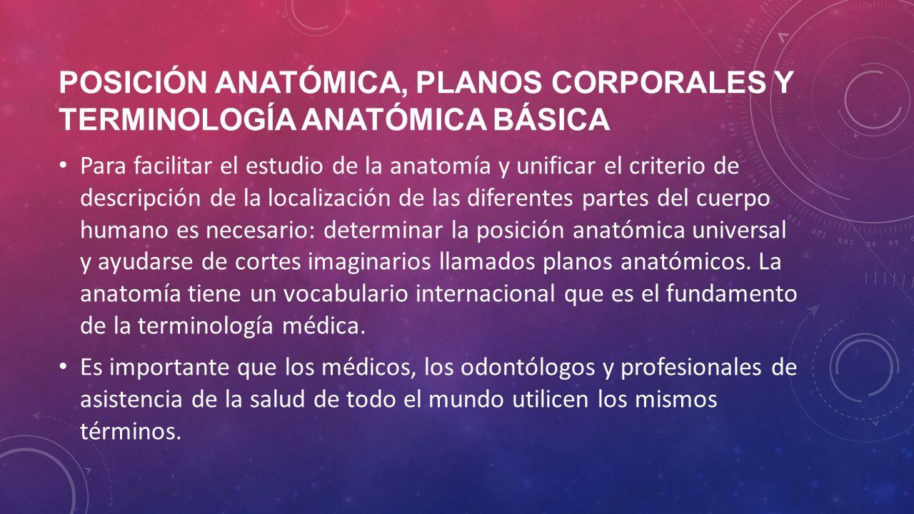Perfecto Anatomía Términos Direccionales Patrón - Imágenes de ...
