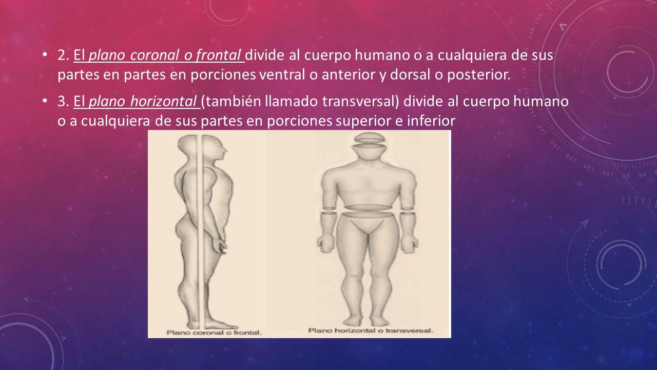 PLANIMETRÍA Y CAVIDADES DEL CUERPO HUMANO PROFR. RODOLFO DIAZ MACIAS ...