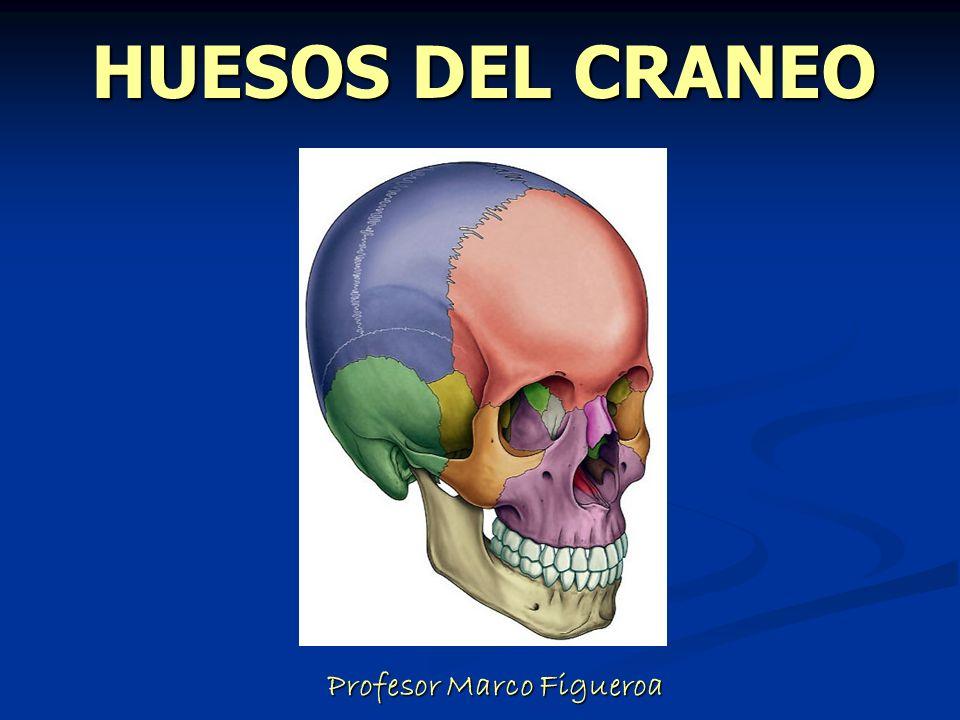 HUESOS DEL CRANEO Profesor Marco Figueroa Profesor Marco Figueroa ...