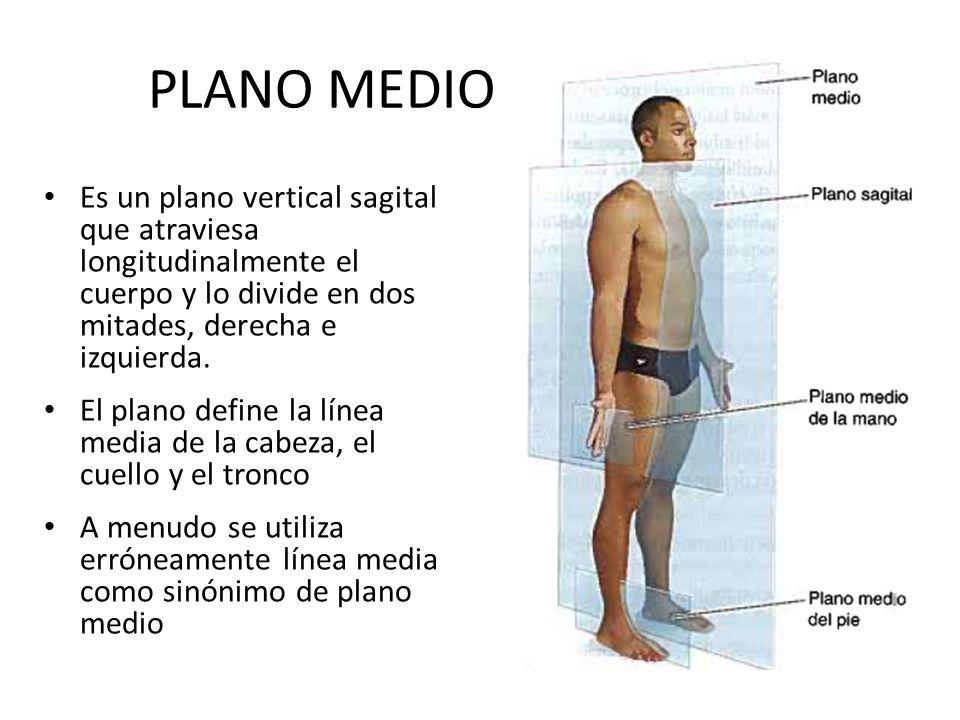NOMENCLATURA Alejandro Gómez Rodas Fisioterapeuta y Kinesiólogo ...