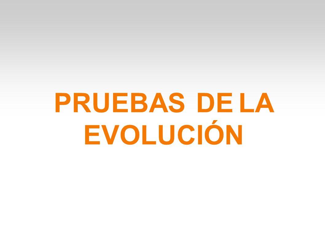 PRUEBAS DE LA EVOLUCIÓN. DIFERENCIAS ENTRE PRUEBAS CLÁSICAS ...