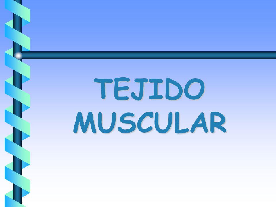 TEJIDO MUSCULAR. b Formación de Músculos del Tórax Esquelético ...