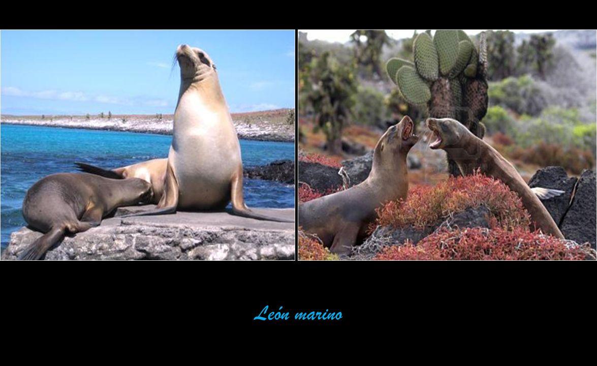 El Archipiélago de Colón o Galápagos está conformado por 13 grandes ...
