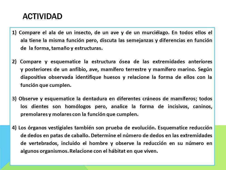 PRUEBAS DE LA EVOLUCIÓN. 1.- PRUEBAS PALEONTOLÓGICAS El estudio de ...