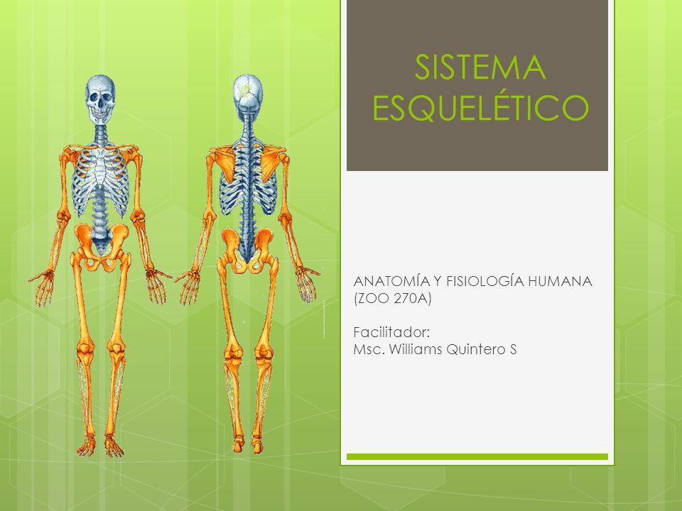 SISTEMA ESQUELÉTICO ANATOMÍA Y FISIOLOGÍA HUMANA (ZOO 270A ...