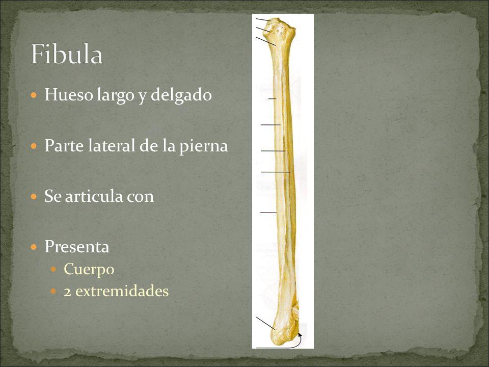 Famoso Hueso Medial De La Pierna Cresta - Imágenes de Anatomía ...