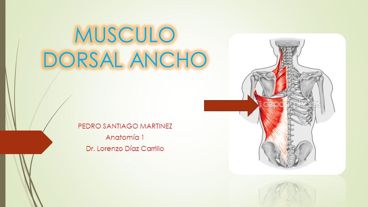"""PEDRO SANTIAGO MARTINEZ Anatomía 1 Dr. Lorenzo Díaz Carrillo 1 """"A ..."""