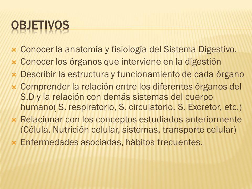 Conocer la anatomía y fisiología del Sistema Digestivo.  Conocer ...