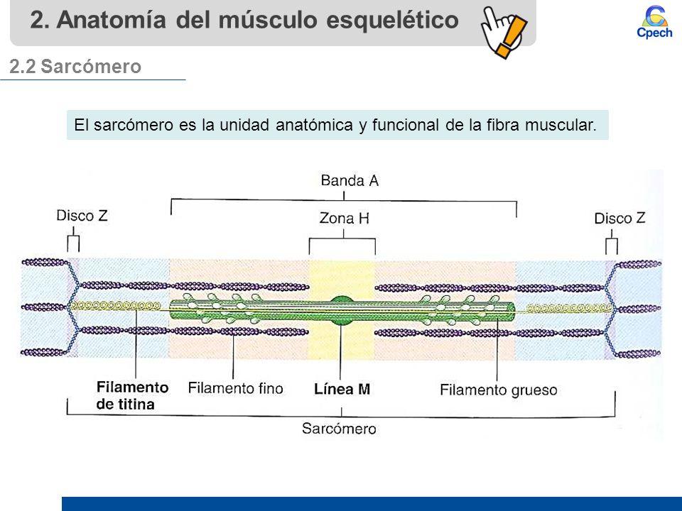 PPTCEL007BL11-A16V1 Clase Fisiología muscular y ventilación. - ppt ...