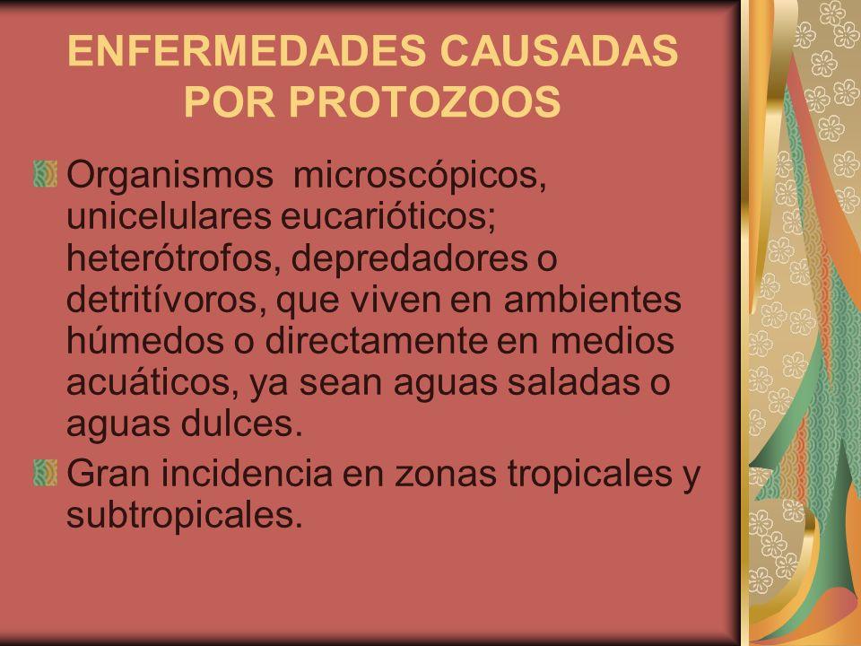 como prevenir enfermedades por protozoarios