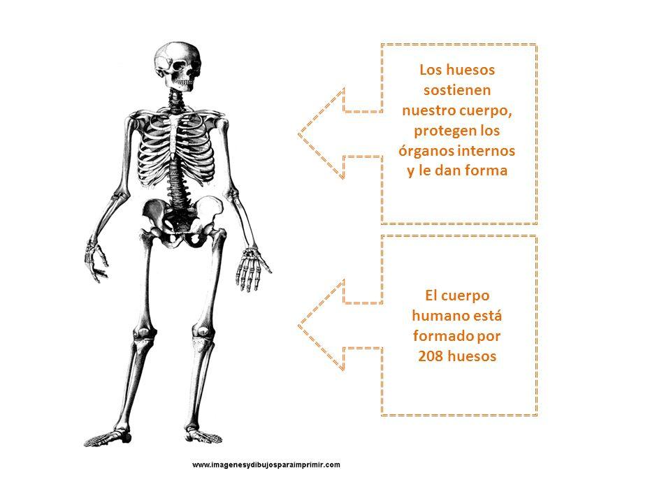 Excepcional órganos Internos En El Cuerpo Humano Viñeta - Anatomía ...
