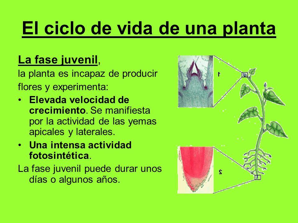 UNIDAD 7 Las plantas con flor: estructura y función. - ppt descargar