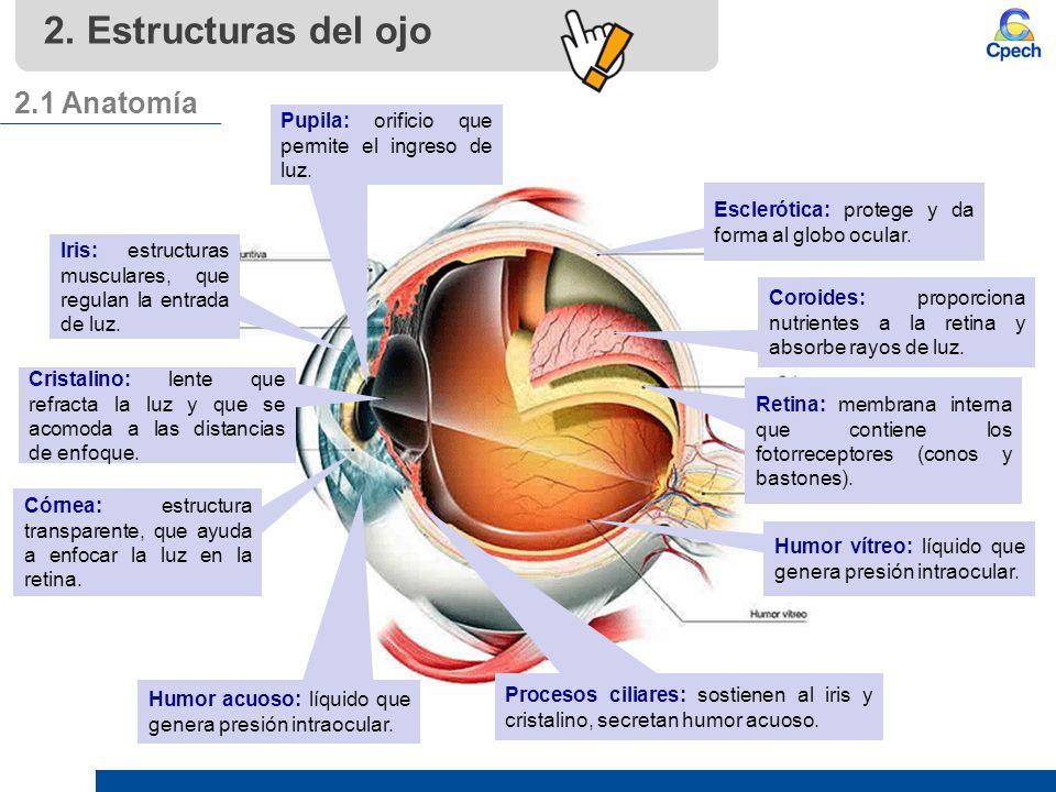PPTCEL006BL11-A16V1 Clase Receptores: el globo ocular. - ppt descargar