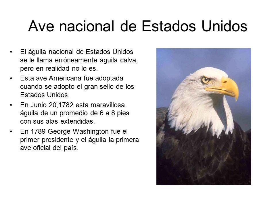 Por: Frida y Thomas Mapa de Estados Unidos Estados Unidos tiene al ...