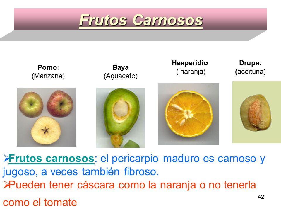 1 Fanerógamas Con flores, que desarrollan frutos y semillas para su ...