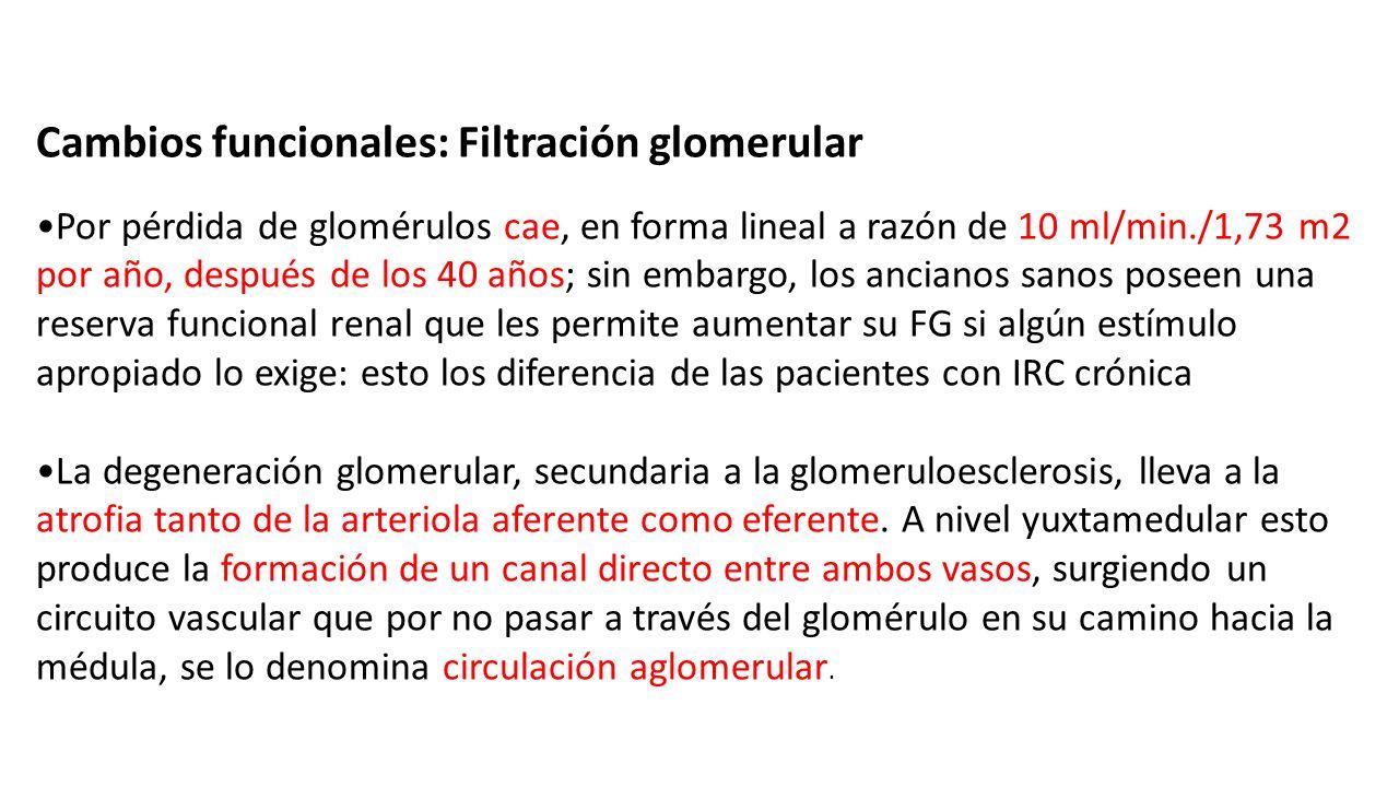 Circuito Vascular : Dr. heyne espinoza nÚÑez. diversos autores han mostrado que el