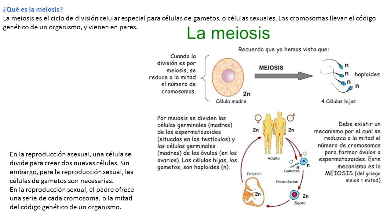 Diferencia de celula sexual y asexual