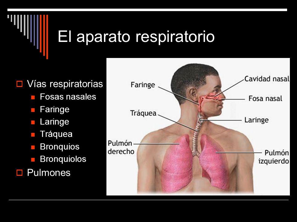 Tema 4: Anatomía y fisiología del Aparato Respiratorio. - ppt descargar
