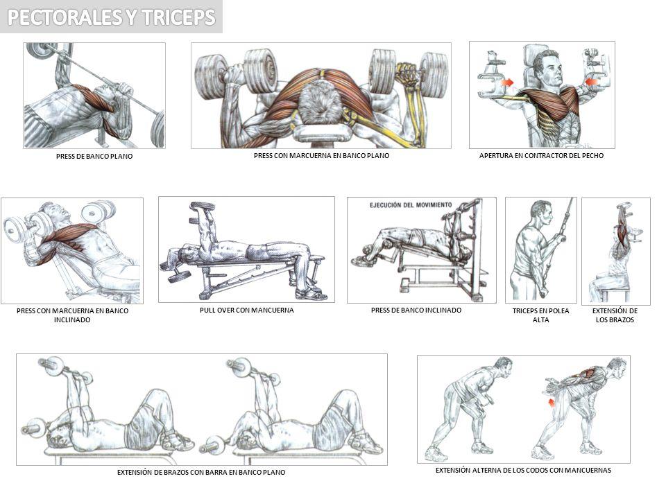 triceps con barra en banco