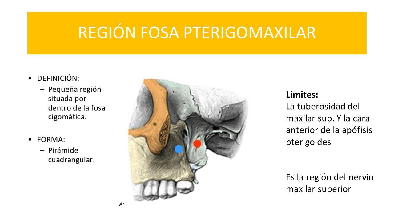 UNIVERSIDAD DE GUAYAQUIL FACULTAD PILOTO DE ODONTOLOGIA REGIÓN DE LA ...