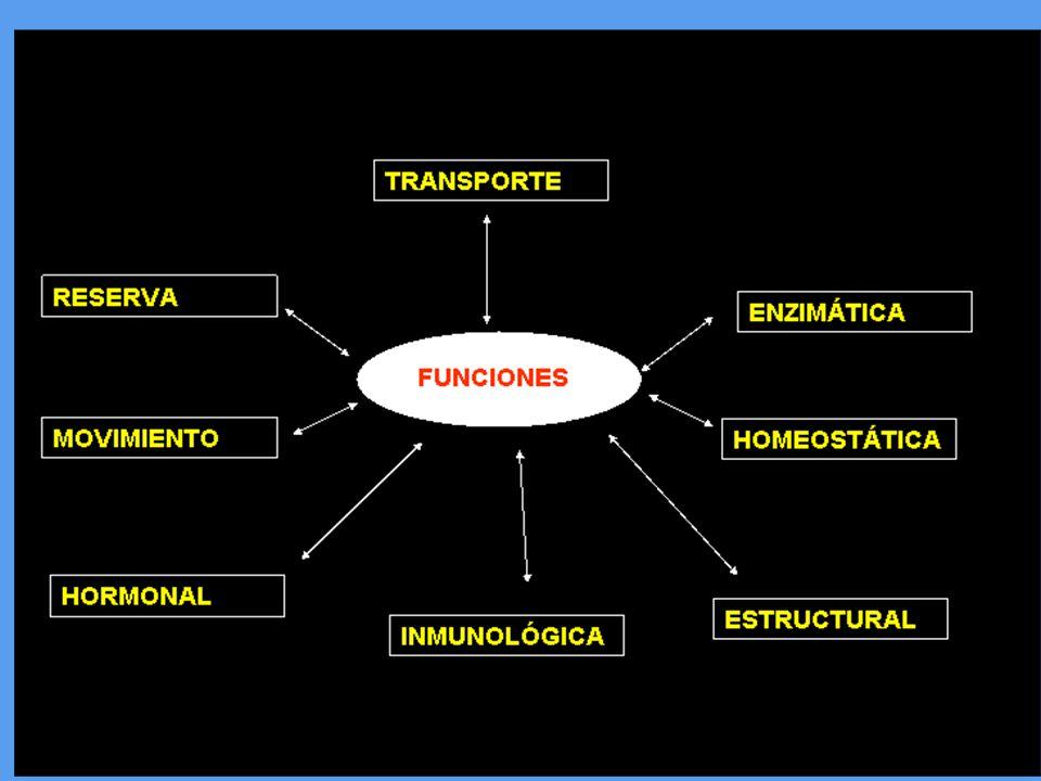 Funcion De Las Proteinas Ppt Video Online Descargar