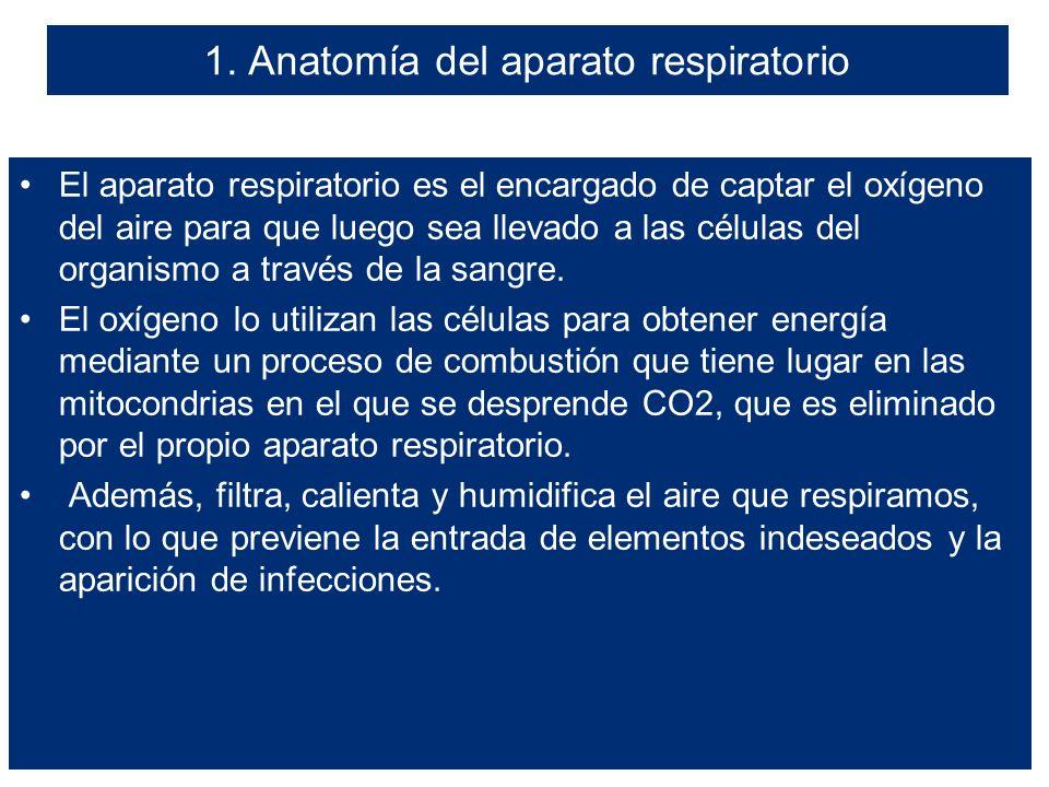 UNIDAD 5. FISIOLOGÍA Y PATOLOGÍA DEL APARATO RESPIRATORIO ÍNDICE 1 ...