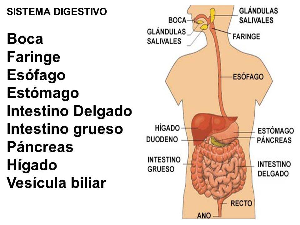 ASIGNATURA: ANATOMIA Y FISIOLOGIA 2016 TEMA: SISTEMA DIGESTIVO Tubo ...