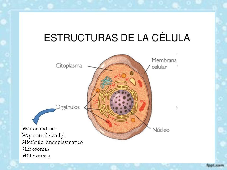 Unidad anatómica, funcional y genética de los seres vivos. Todos los ...
