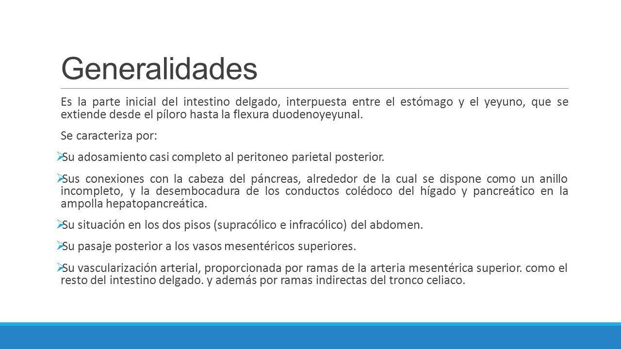 ANATOMIA DE DUODENO. Generalidades Es la parte inicial del intestino ...