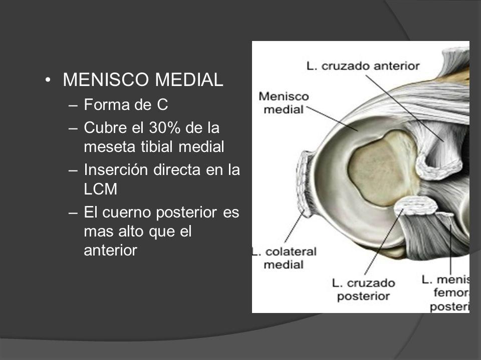 ANATOMIA RODILLA  La anatomía de la articulación de la rodilla es ...