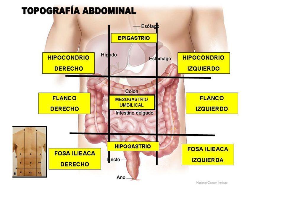 Cuadrantes abdominales miologia-abdomen - ppt descargar