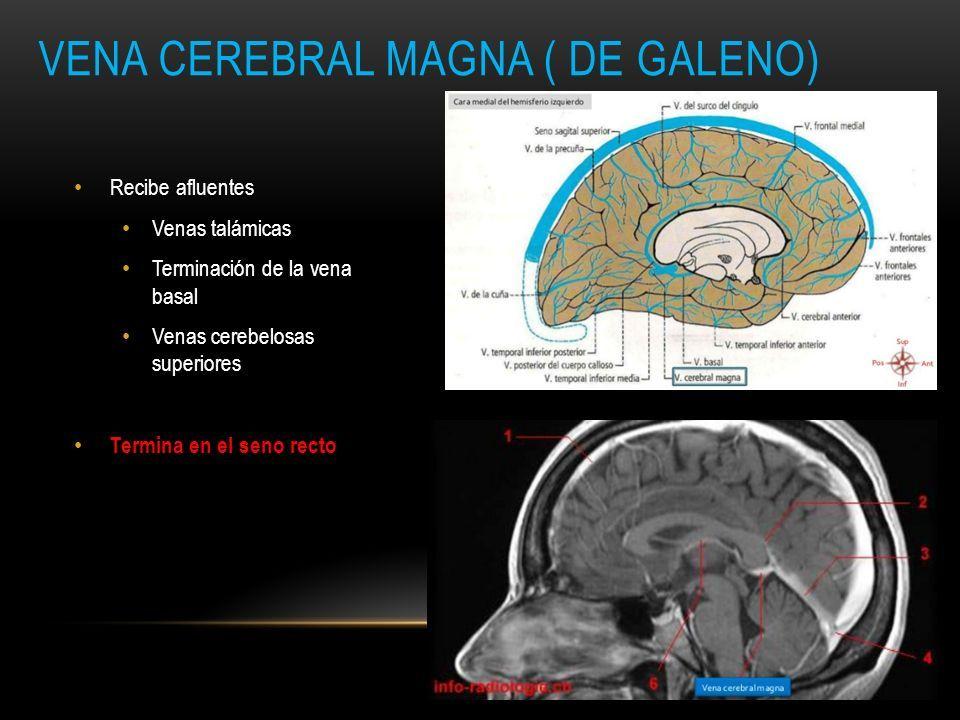 NEURORADIOLOGIA: ANATOMÍA VENOSA CEREBRAL. SISTEMAS VENOSOS DRENAJE ...