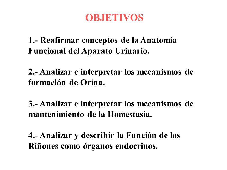 UNIVERSIDAD DEL ZULIA FACULTAD DE MEDICINA ESCUELA DE MEDICINA ...