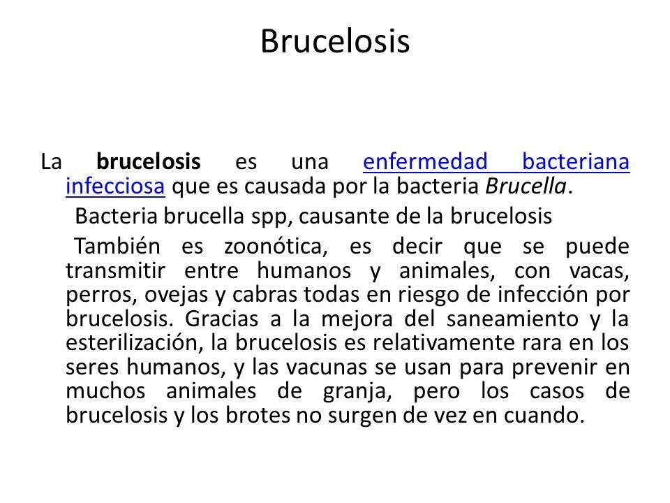 Brucelosis Ppt Descargar